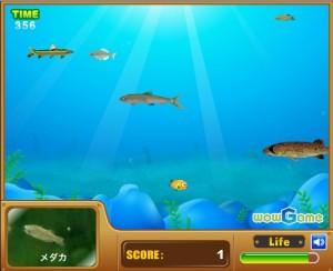 dorefish2 300x244 【ゲーム】暇つぶしにどうぞ!WOWGAMEでミニゲームを楽しんでみよう