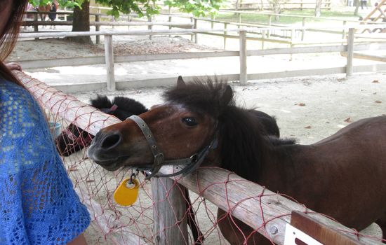 IMG 0523 【旅行】那須りんどう湖ファミリー牧場でアルパカを見る【那須】