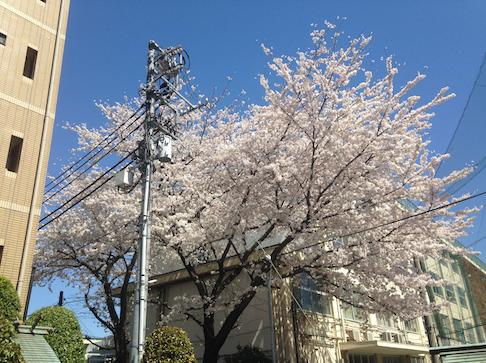 2014 03 31 2228 【iPhone】桜の名所を簡単に調べられるアプリ「桜マップ」で桜巡りをしよう!
