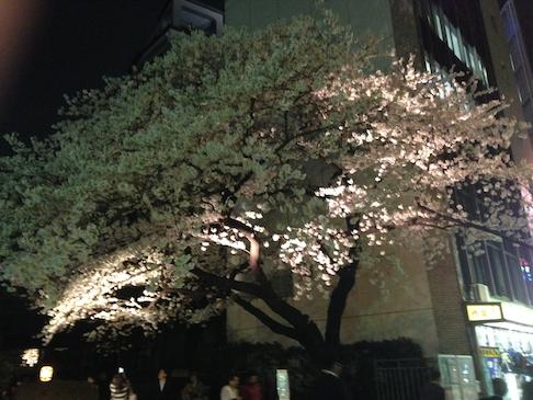 2014 03 31 2230 【iPhone】桜の名所を簡単に調べられるアプリ「桜マップ」で桜巡りをしよう!
